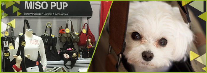miso-pup-header